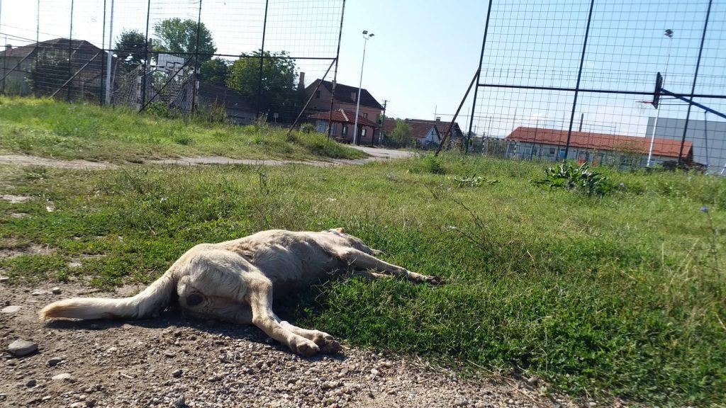 Nastavlja se masovno trovanje životinja u naselju Kumalak