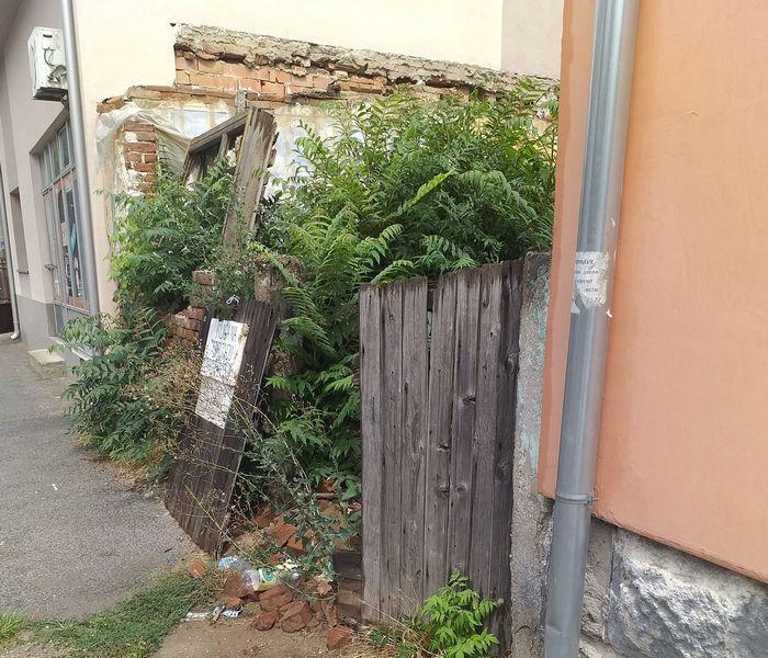 Panika zbog napuštene kuće pune zmija