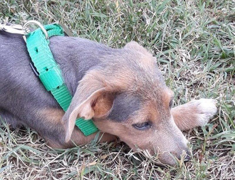 Masovno trovanje pasa, na ulici ovog grada ih živi preko hiljadu