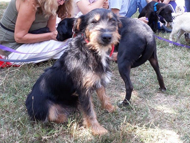 """Na izložbi pasa u Leskovcu prodefilovalo preko 200 pasa, i mešanci dobili svojih """"pet minuta"""""""