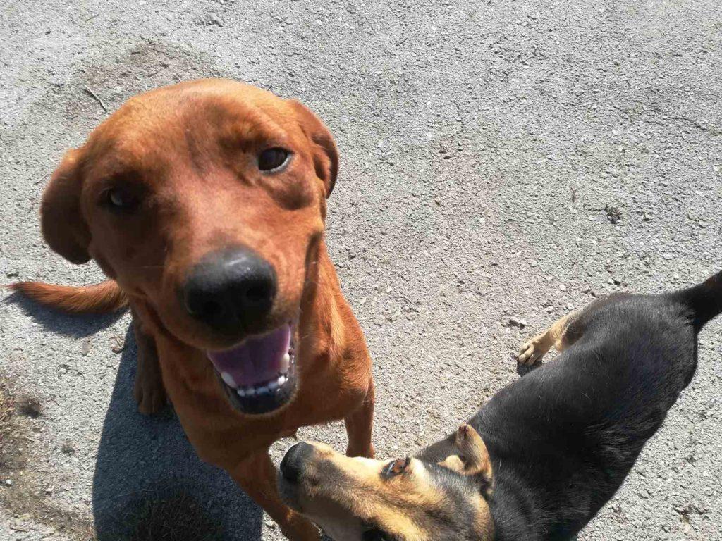 Misija leskovačkog azila za pse je da udomi ove životinje