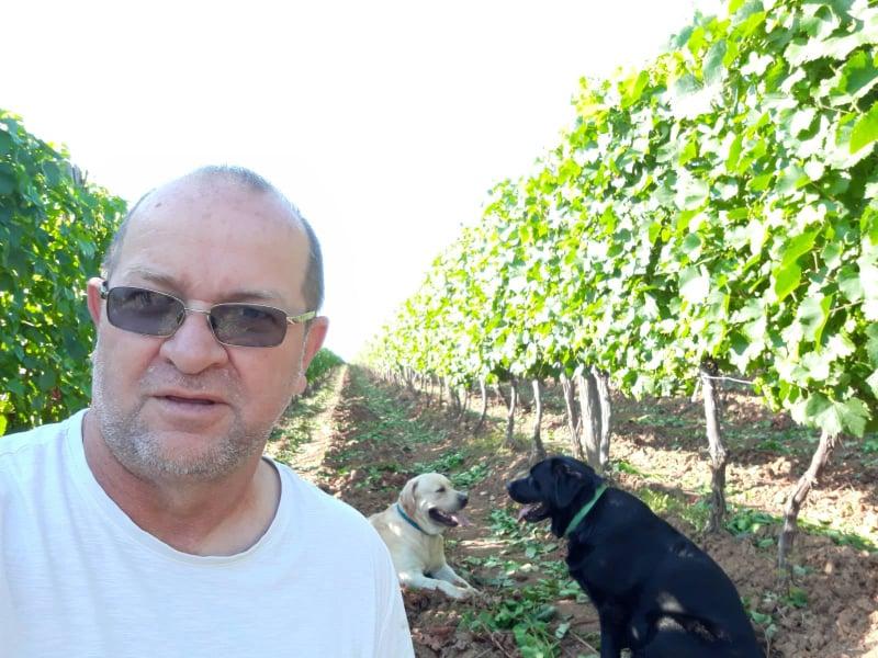 Vinogradarstvo prati sudbinu čitave poljoprivrede u Srbiji