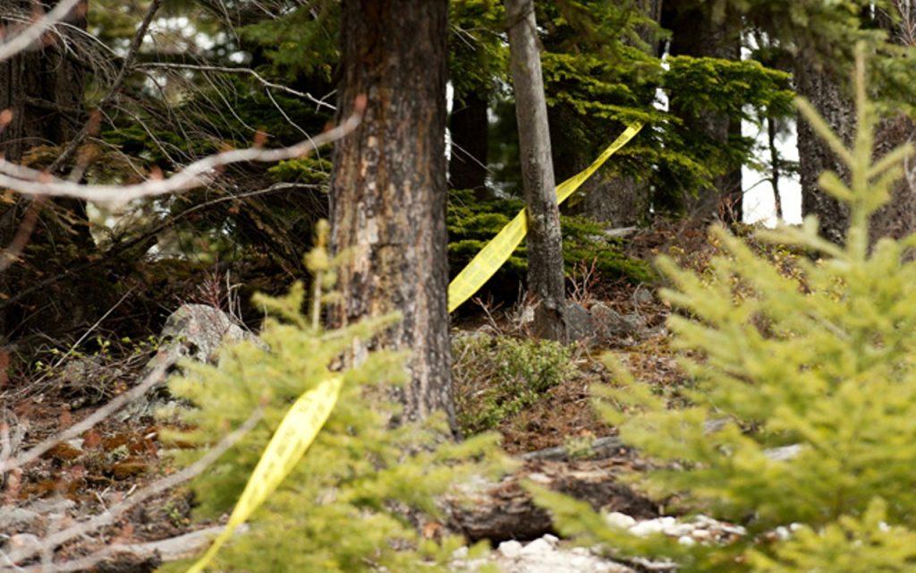 Misterija koja je danas potresla celo Predejane: U šumi pronađen leš muškarca u jezivom stanju