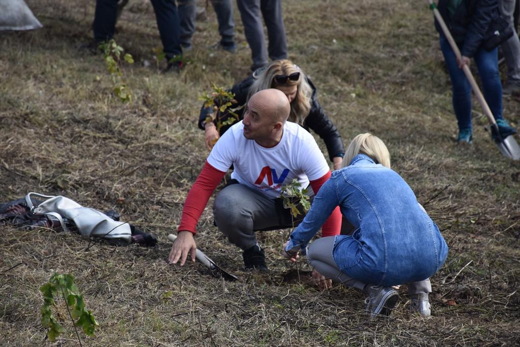 Naprednjaci zasadili 100 mladih javora na Hisaru