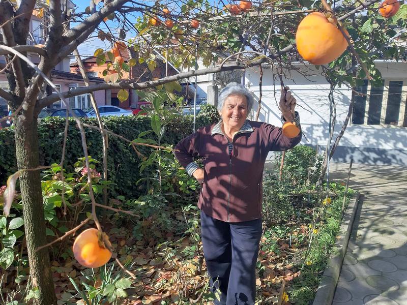 Lekovita japanska jabuka iz baka Latinkine bašte