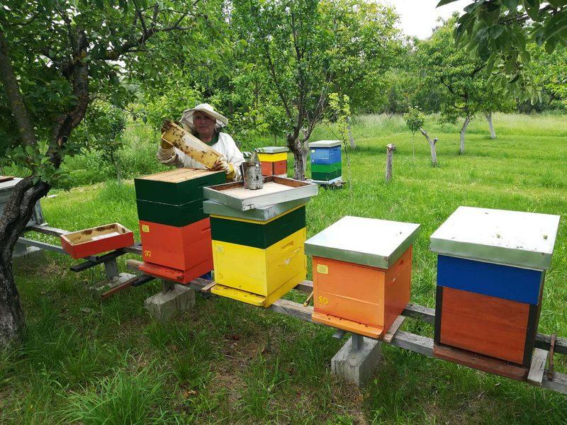 """""""Pčelica"""" pripremila med za starije od 65 godina"""