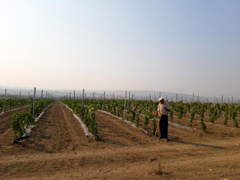 Podsticajna sredstva za biljnu proizvodnju svim poljoprivrednicima