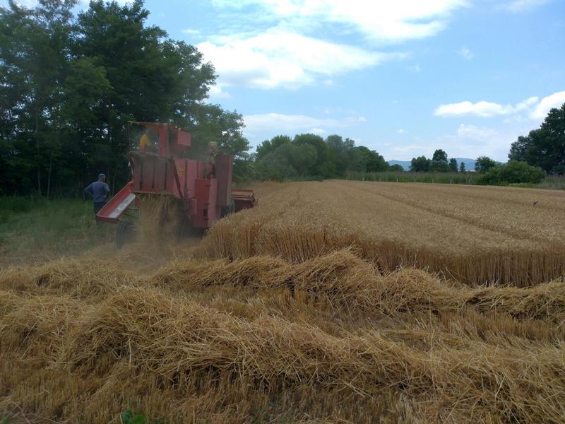 Podsticaji poljoprivrednicima za biljnu proizvodnju