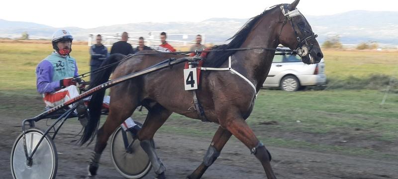 Nišlija Milan Tasić pobednik kasačkih trka u Leskovcu