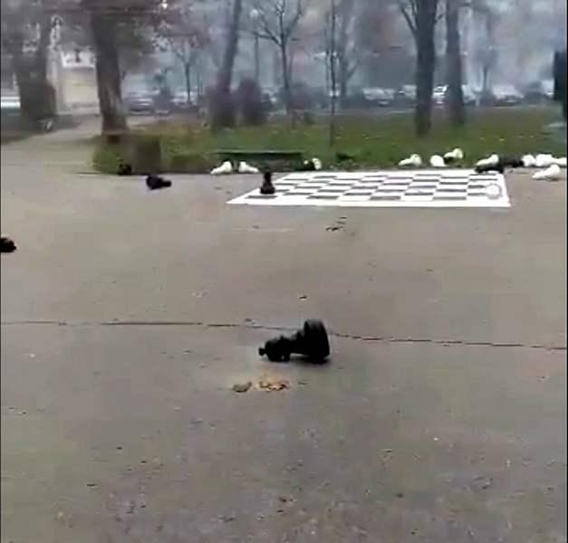 Vandali noćas u Leskovcu uništili šahovski mobilijar u parku