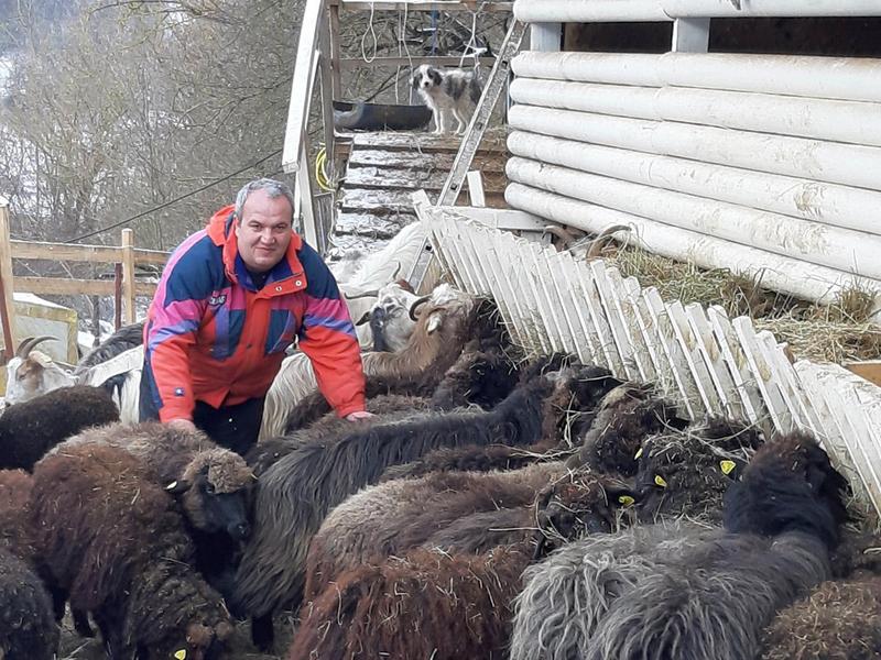 Na svom imanju u etno selu, Nenad počeo probnu proizvodnju sira od Buše
