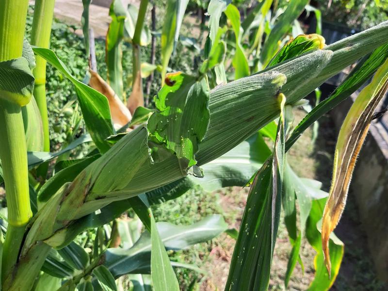 Izmenjeni podsticaji za biljnu proizvodnju