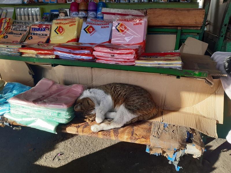 Tezga na leskovačkoj pijaci udoban dom jedne mačke