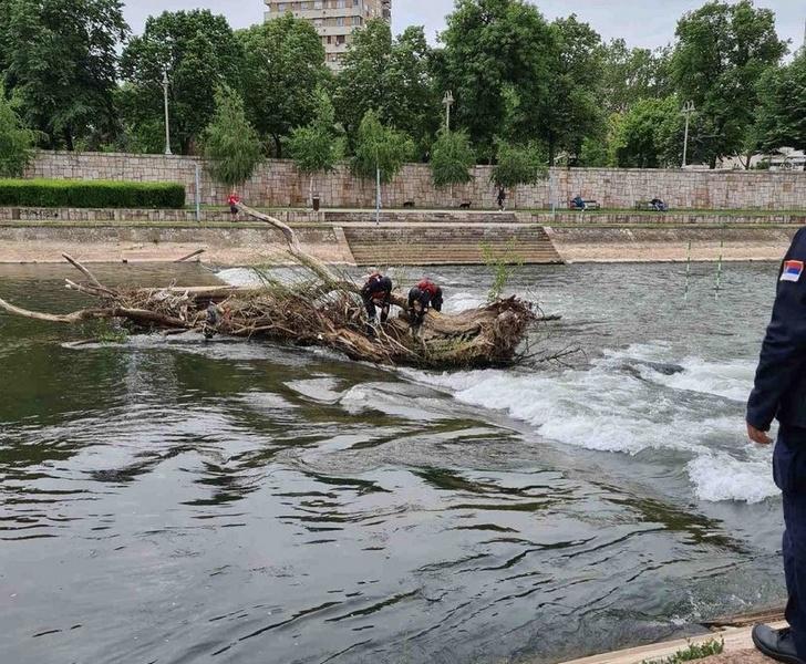 """Uklonjeno zalutalo drvo iz reke na inicijativu najpopularnije Instagram stranice """"Niš noću"""""""