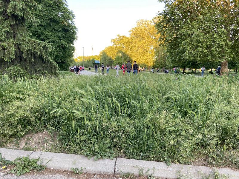 Urasla trava i zelenilo oko parka gde se deca svakodnevno igraju