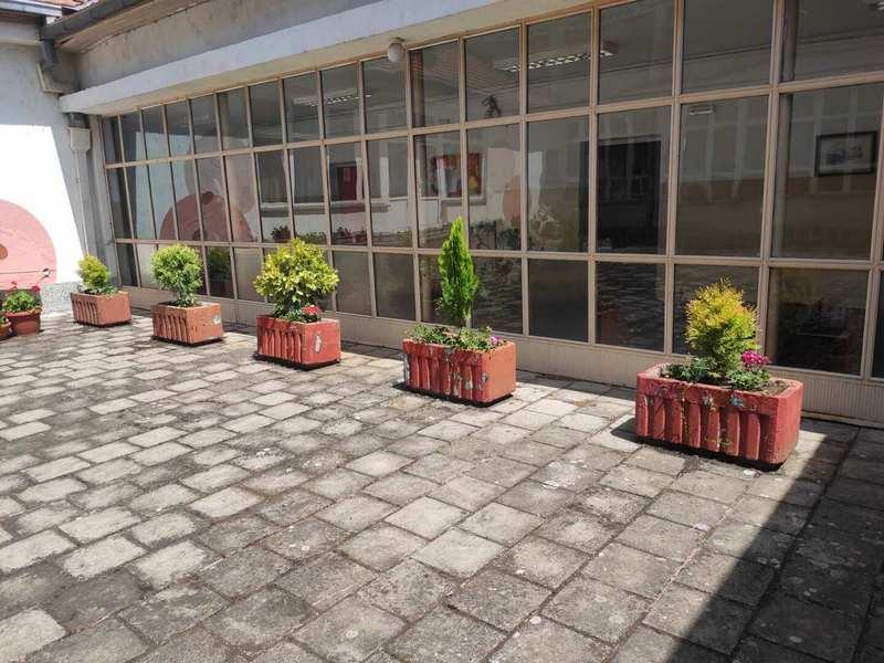 """Zapušteno dvorište škole """"Car Konstantin"""" bogatije za 87 ukrasnih četinara"""