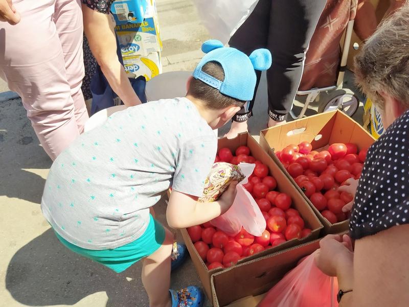 Poljoprivrednici Leskovčanima podelili oko 4 tone paradajza (video)