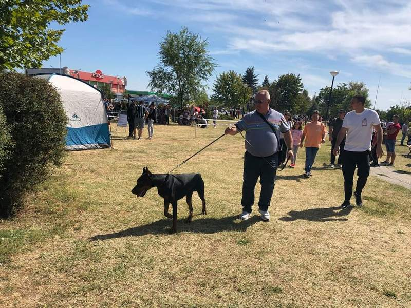 Gradonačelnikov doberman Hanibal poneo nacionalnu titutu najlepšeg psa u svom razredu