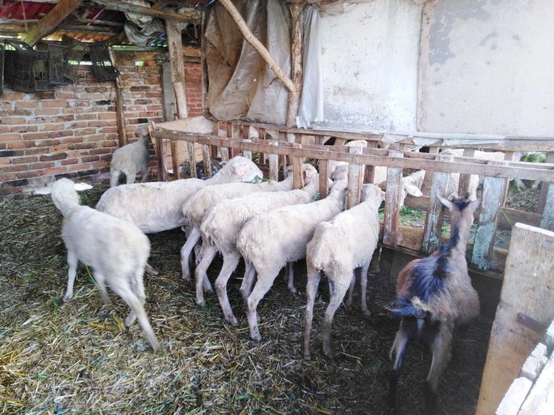 Subvencije za pčelare, za kupovinu ovaca i koza i za voćare i vinogradare