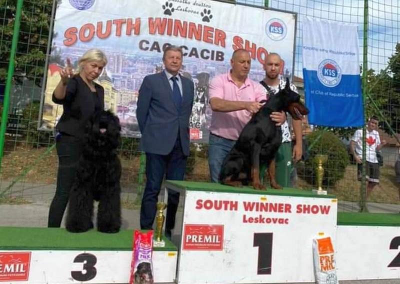Sveukupni pobednik na izložbi pasa u Leskovcu iz Bugarske, a na drugom mestu doberman predsednika opštine Vranjska Banja