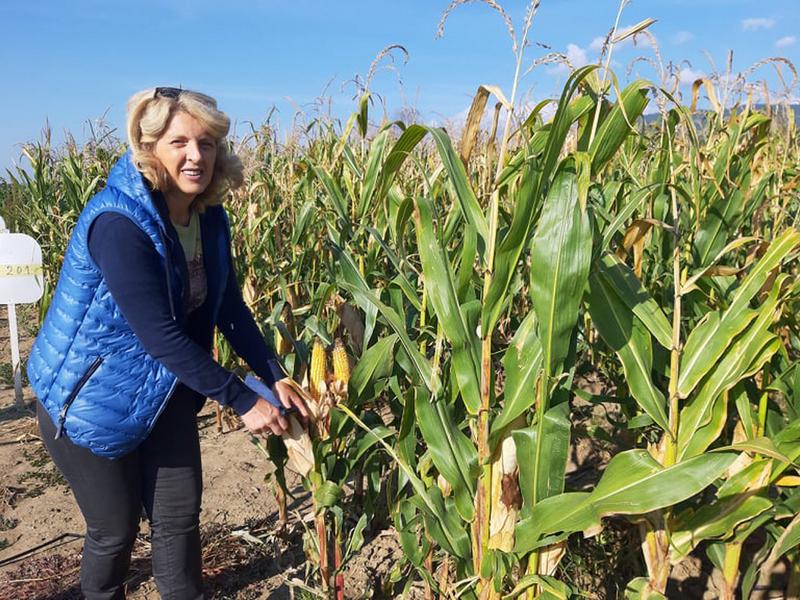 Samo navodnjavanjem do visokih prinosa kukuruza